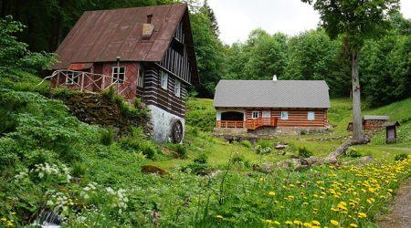 Ogród, ciekawostki, porady odnośnie prowadzenia ogrodu